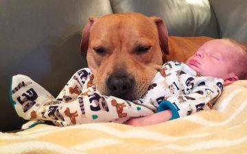 Какая порода собак лучше для детей