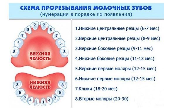 skhema-prorezyvaniya-zubov