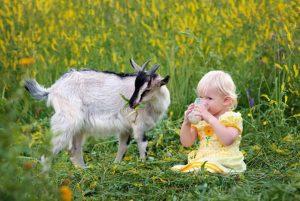 ребенок пьет козье молоко