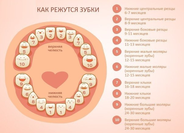 как режуться зубы у детей