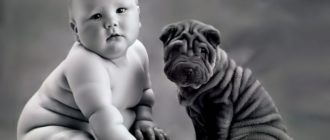 Полный малыш и собака