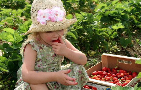 грязные ягоды