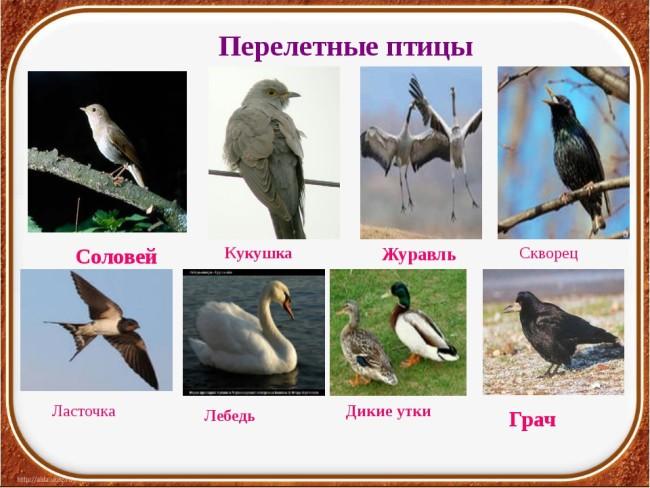 Перелетные птички