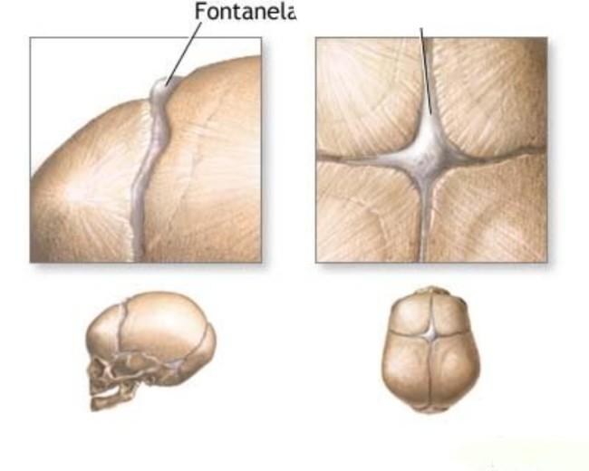 Физиология грудничка
