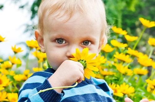 нюхает цветы